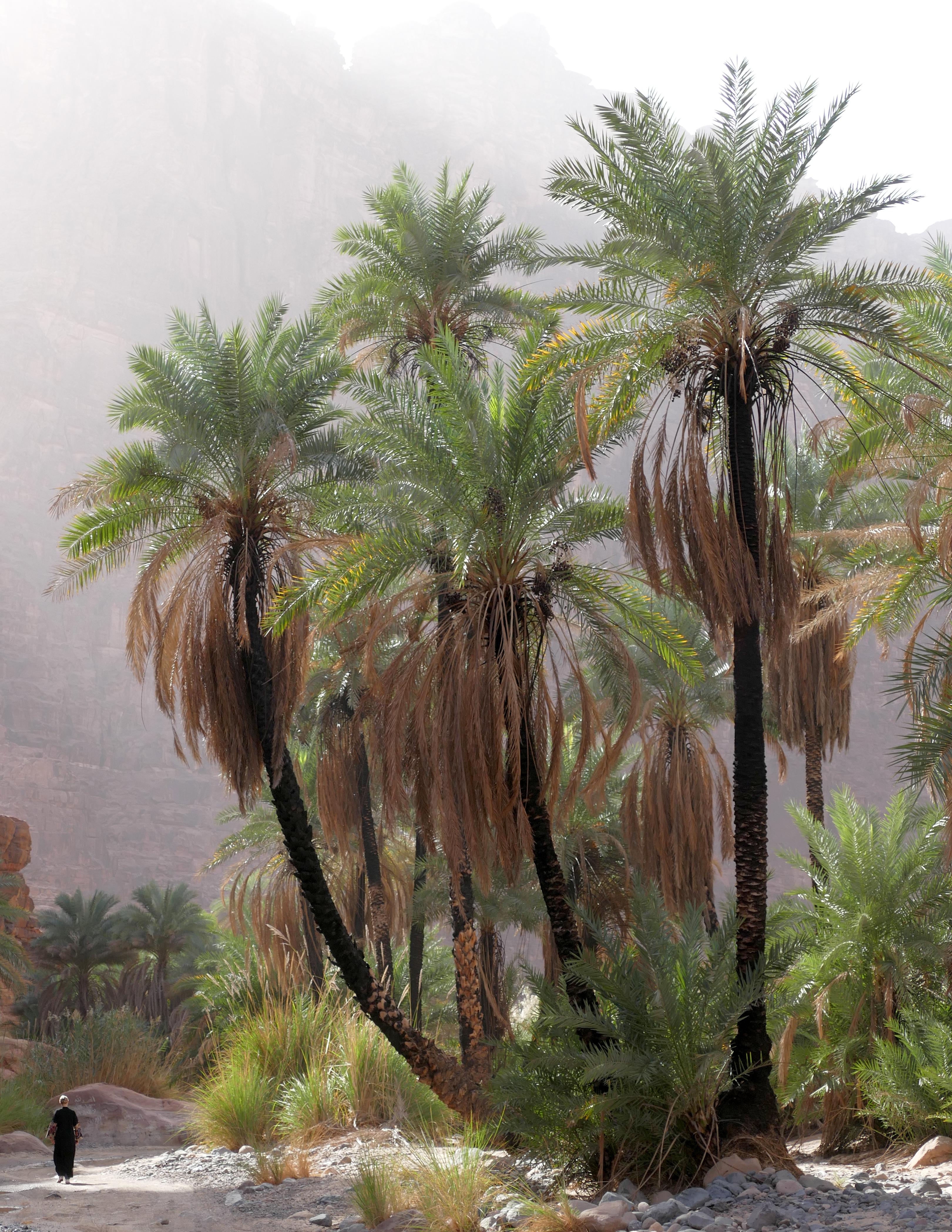 2017 Gabriel Wittum - Palm Trees in Dissah